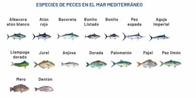 pesca en Roda de Barà